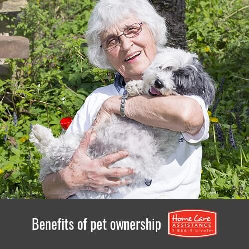 5 Reasons Your Elderly Parent Will Benefit from Owning a Pet