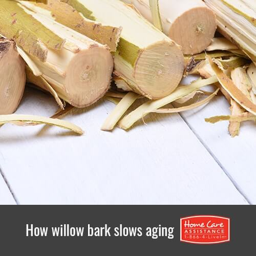 Does Willow Bark Have Anti-Aging Properties in Oshkosh, WI?