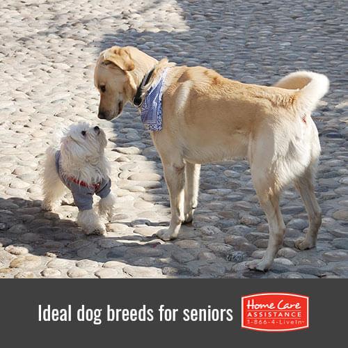 6 Perfect Dog Breeds for Seniors in Oshkosh, WI
